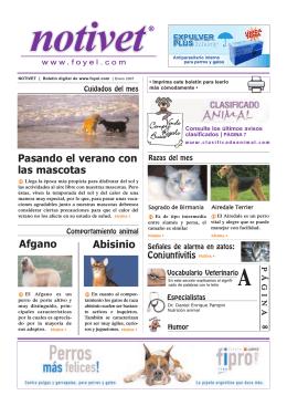 Pasando el verano con las mascotas Conjuntivitis PÁGINA 6