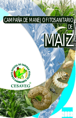 folleto maiz 08.cdr