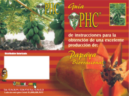 Folleto papaya rojo.cdr