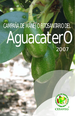 folleto aguacate 07.cdr