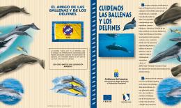 Folleto observación/protección cetáceos en