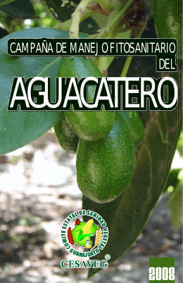 folleto aguacate 08.cdr