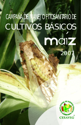folleto maiz.cdr