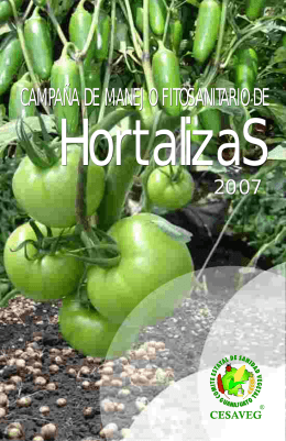 folleto hortalizas 07.cdr