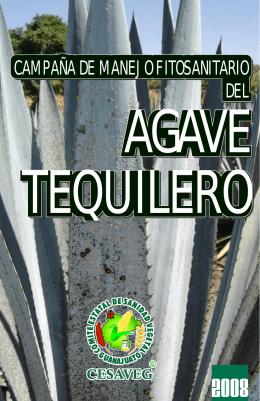 folleto agave 08.cdr