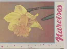 narcisos - DaffLibrary