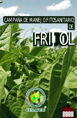 folleto frijol 08.cdr