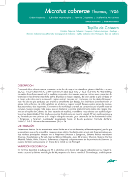 Microtus cabrerae. Topillo de Cabrera