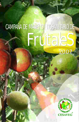 folleto fruta.cdr