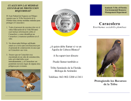 Caracolero - Seminole Tribe of Florida