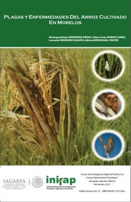 plagas y enfermedades de arroz cultivado en - Biblioteca