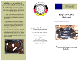 Serpiente Añil Oriental - Seminole Tribe of Florida