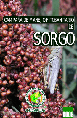 folleto sorgo 08.cdr