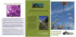 La Revolución de las plantas en Eivissa