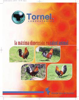 folleto gallos 1/25/10 7:26 PM Page 1 - e
