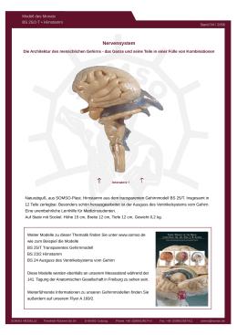 Nervensystem - TAQ Sistemas Médicos
