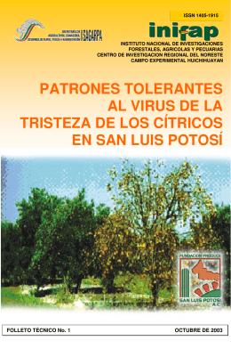 PATRONES TOLERANTES AL VIRUS DE LA TRISTEZA DE LOS