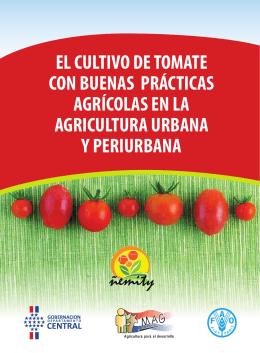 El cultivo de tomate con buenas prácticas agrícolas en la agricultura