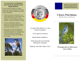 Chara Floridana - Seminole Tribe of Florida