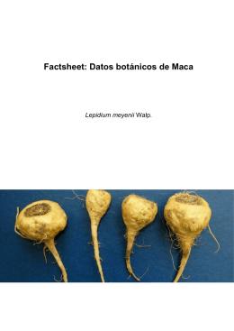 Factsheet: Datos botánicos de Maca