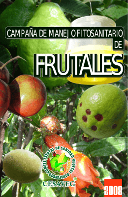 folleto fruta 08.cdr