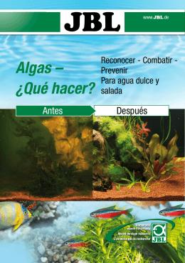 Algas – ¿Qué hacer?