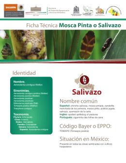 Descargar Ficha técnica Salivazo en PDF