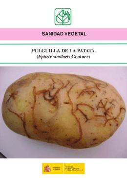 Pulguilla de la patata - Ministerio de Agricultura, Alimentación y