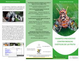 trampeo preventivo contra moscas exóticas de la fruta