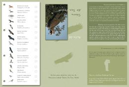 Ruta Ornitológica por la Sierra de San Pedro