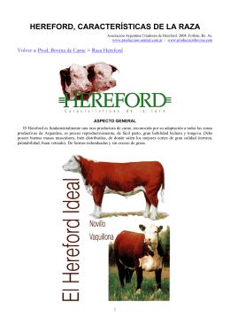HEREFORD, CARACTERÍSTICAS DE LA RAZA