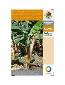 Manual de producción de banano para la región - Biblioteca