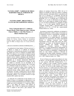 navojoa m2007 - Revista Fitotecnia Mexicana