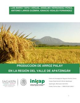 PRODUCCIÓN DE ARROZ PALAY EN LA REGIÓN DEL