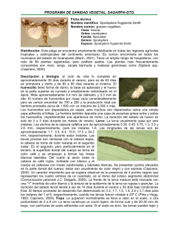 common name: fall armyworm