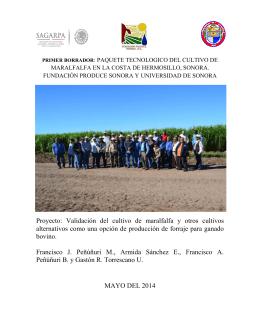 Proyecto: Validación del cultivo de maralfalfa y otros