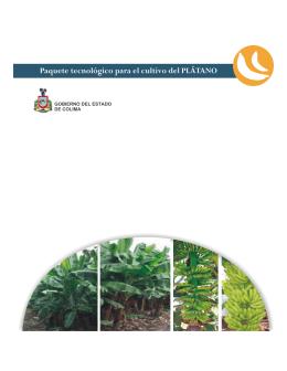 Paquete tecnológico para el cultivo del PLÁTANO