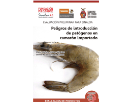 Camaron new.indd - Fundación Produce Sinaloa