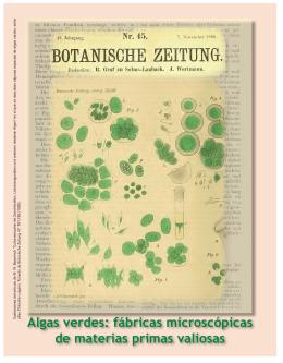 Algas verdes: fábricas microscópicas de materias primas valiosas