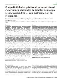 Compatibilidad vegetativa de aislamientos de Fusarium sp