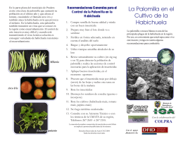 La Palomilla en el Cultivo de la Habichuela