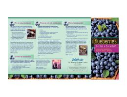 Le Van a encantar! - Blueberry Council