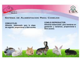 Consulte aqui Folleto para Conejos Caballos