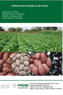 producción de semilla de frijol - INIFAP Zacatecas