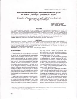 Evaluación del desespigue en el rendimiento de grano de
