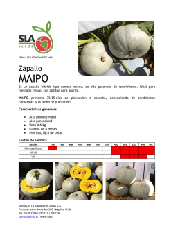 Zapallo - SLA | Semillas Latinoamericanas SA
