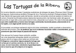 Folleto de tortugas