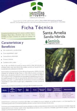 Ficha tecnica Sandia Santa Amelia 2