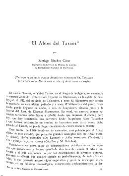 """""""El Abies del Tazaot1"""