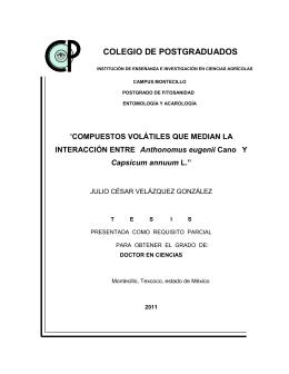 Capsicum annum - Biblioteca